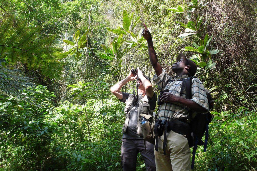 birdwatching tours in uganda