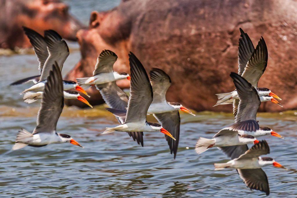 Birding in Queen Elizabeth NP