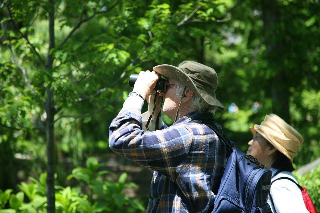 Bird watching in Kibale Forest
