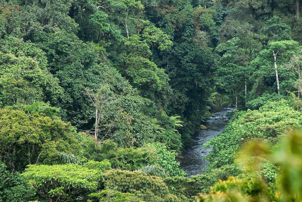kashasha river trail bwindi walking safari