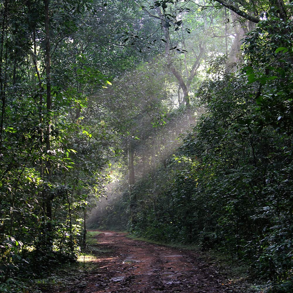 walking in kibale forest
