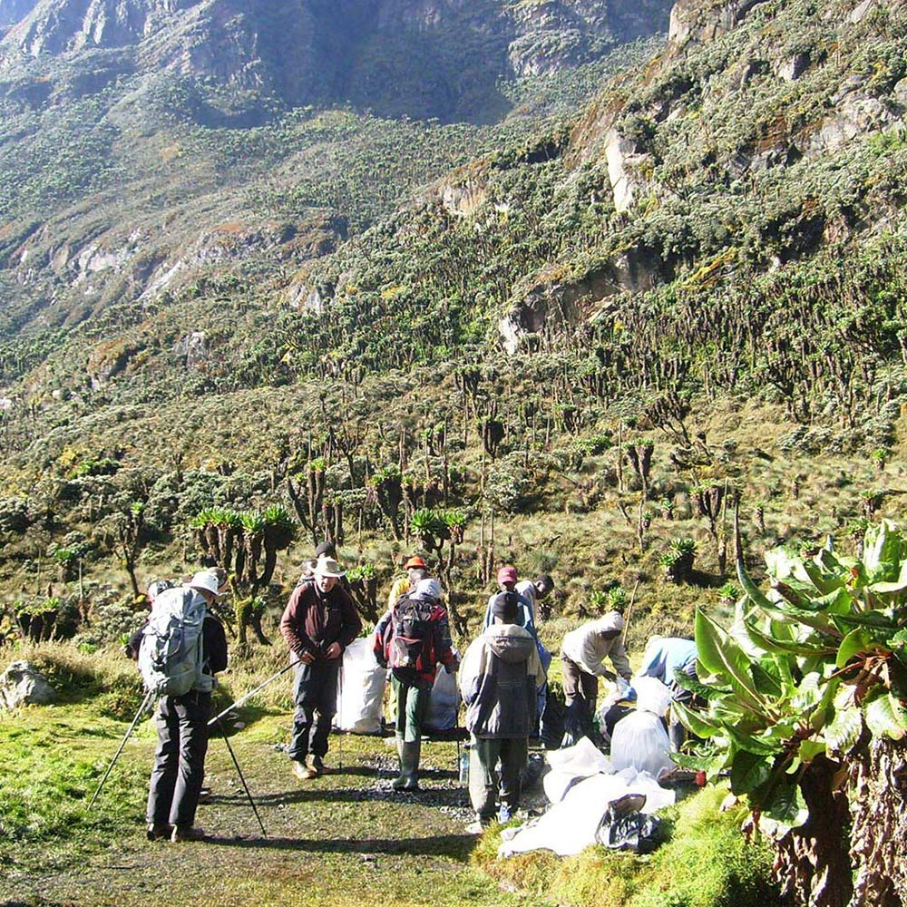 Walking in rwenzori mountains